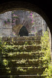 Stairway of the Roman Theater in Benevento, Italy. Purple flowers bloom on an arch of the ancient Roman Theater in Benevento,Lazio, Italy. Weeds also partly Royalty Free Stock Images