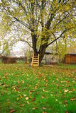 Stairway to autumn. A ladder leans against a tree in the fall Royalty Free Stock Image