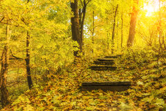 Stairway to the beautiful  autumn forest Stock Photography