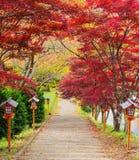 Stairway to chureito pagoda, Fujiyoshida, Japan Royalty Free Stock Photos