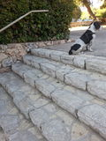 Stairway to Doggie II Stock Photography