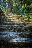 Stairway to an enchanted forest Stock Images