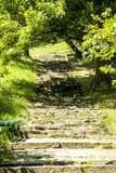 Stairway to forest royalty free stock photography