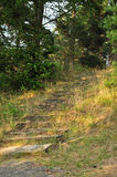 Stairway to forest. Concrete stairs to the forest Stock Images