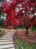 Stairway to heaven, autumn foliage in korea stock photo