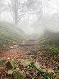 Stairway to heaven on a foggy day, Forest and fog Stock Image