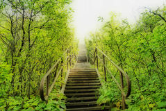 Stairway to Heaven. HDR Stairway to Heavenly Nature Royalty Free Stock Photo