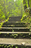 Stairway to jungle Royalty Free Stock Images