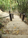 Stairway to jungle, Khao Yai national park Royalty Free Stock Photos