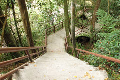 Stairway to jungle, Khao Yai national park Royalty Free Stock Image