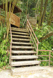 Stairway to jungle, Khao Yai national park Stock Image
