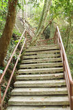 Stairway to jungle, Khao Yai national park Stock Images