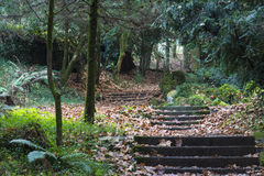 Stairway to nature Royalty Free Stock Image