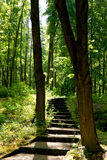 Stairway through trees Royalty Free Stock Photography