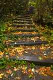 Stairway through the Trees. A windy stairway through the trees Royalty Free Stock Photos