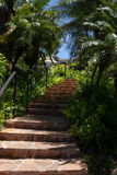Stairway in tropics Stock Photos