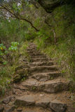 Stairway into the wildness Royalty Free Stock Images