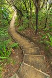 A stairway winds through native forest. Ulva Island, New Zealand. Ulva Island is a nature reserve off the coast of the much larger Stewart Island in the far Royalty Free Stock Image