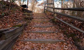 Stairway in the Woods. A wooden stairway built in the woods by historic Allaire Village Stock Images
