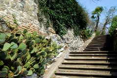 Stairways with prickly pears in a villa of Arquà Petrarca Veneto Ital Stock Photos