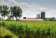 Stajnia i silos w Michigan kukurydzanym polu Fotografia Royalty Free