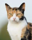 Stajnia Kot Zdjęcie Royalty Free
