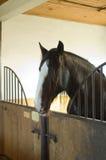 stajnie końskie Obrazy Royalty Free