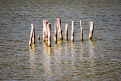 Stakes in the lagoon Stock Photography
