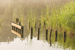 Stakes and reed at sunrise at. The waterside in summer Stock Photos