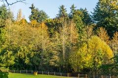 Staket And Autumn Trees 2 royaltyfria bilder