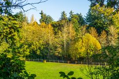 Staket And Autumn Trees royaltyfri fotografi