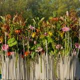 Staket av blommor ståta Arkivbilder