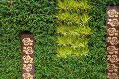 Staket av gröna buskar Royaltyfria Foton