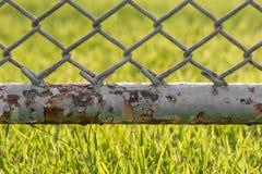 Staket för Chain sammanlänkning med gräsmattabakgrund Royaltyfri Bild