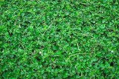 Staket för gräsplan för trädbladbuskar royaltyfri foto