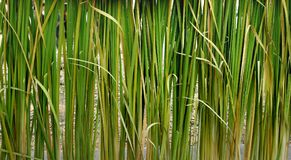 Staket för grön växt Royaltyfri Fotografi
