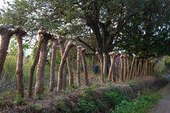 Staket för väg för land för trädstubbe arkivfoto