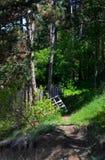 Staket i den gröna skogen royaltyfria bilder