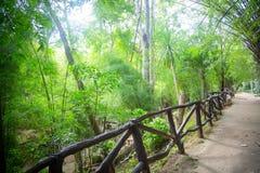 Staket i djungeln Arkivbild