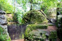 Staket i en skog royaltyfri fotografi