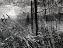 Staket i fältet fotografering för bildbyråer