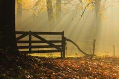 Staket i skog Arkivbilder