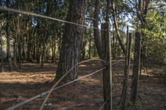 Staket i skogen Royaltyfri Fotografi
