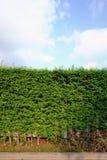 Staket med rad av det lilla trädet Royaltyfri Foto