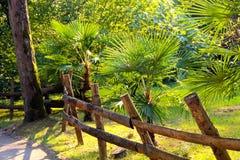 Staket och palmträd Royaltyfria Bilder