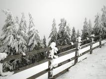 Staket och snöig träd Royaltyfria Bilder