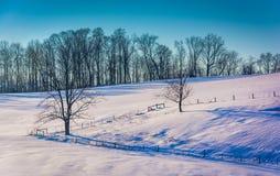 Staket och träd på en snö täckte kullen i lantliga York County, Pe royaltyfri bild