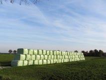 Staket på fältet i vindNederländerna Arkivbild