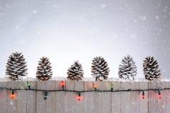 Staket With Pine Cones royaltyfria foton