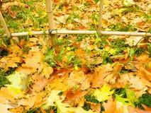 Staket Poles Royaltyfri Foto